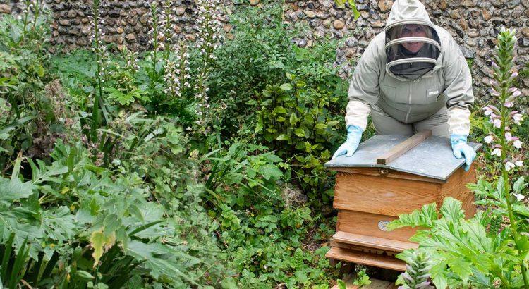 Karen Constantine beekeeping