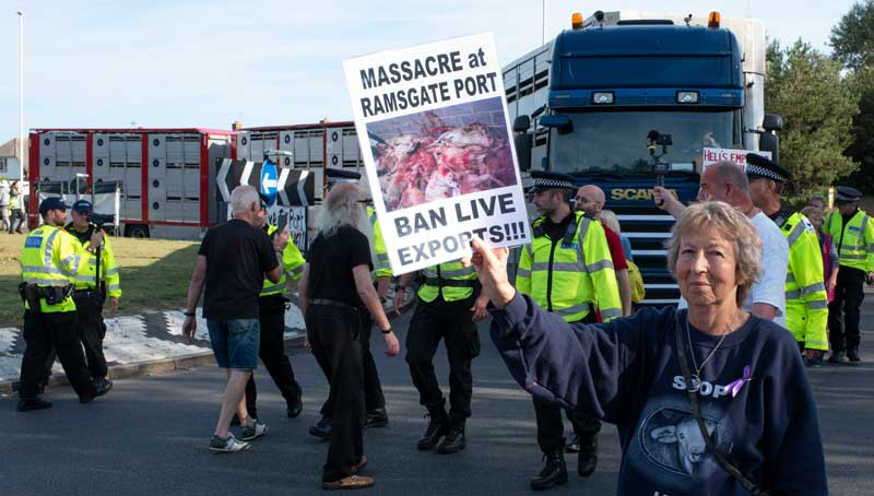 Protestors against live animal exports from Ramsgate Port