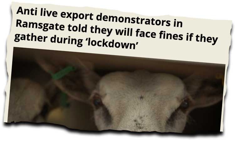 news clipping about live animal exports